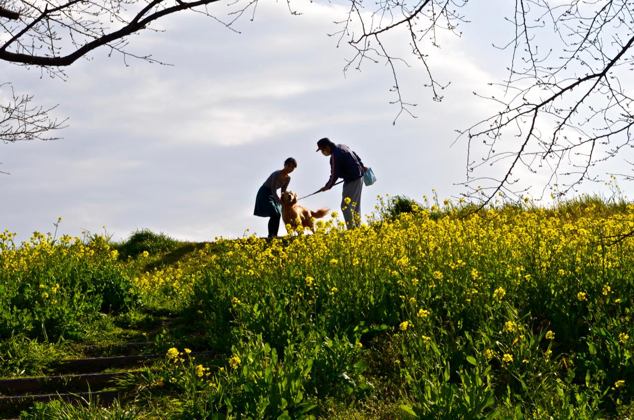急遽籠原まで行くことになり、菜の花とうどんを楽しんだ話