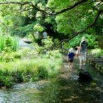 水の都・三島らしい風景「源兵衛川」でせせらぎ散歩