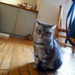 鎌倉・江ノ島でリスと猫と電車と
